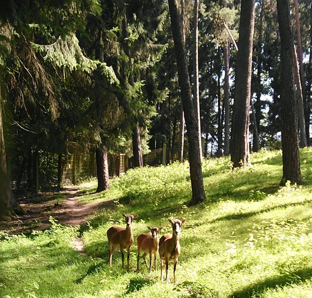 Wildpark Schwarze Berge