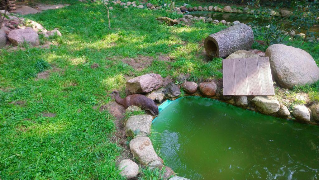 Ottergehe im Wildpark Schwarze Berge